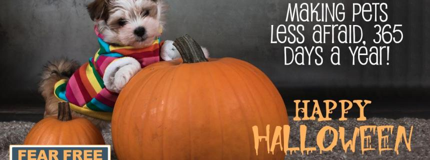 Fear Free Halloween Tips for your Pets