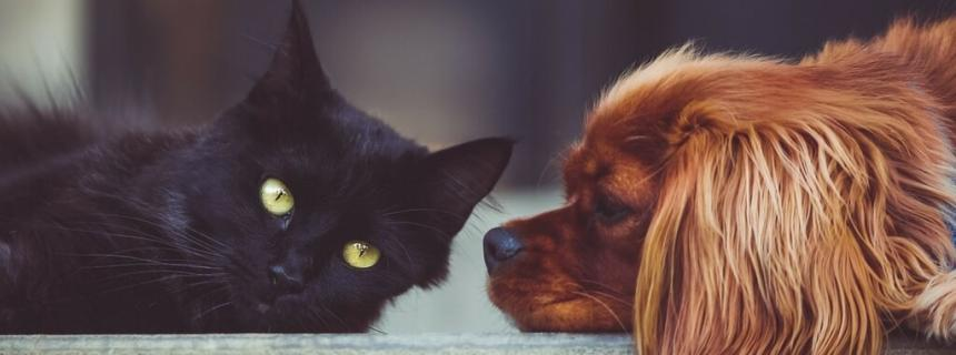 Your Pet and Heartworm Disease