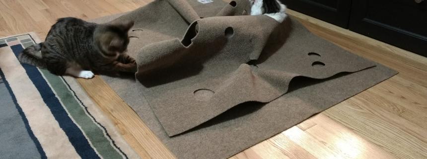 Feline Enrichment