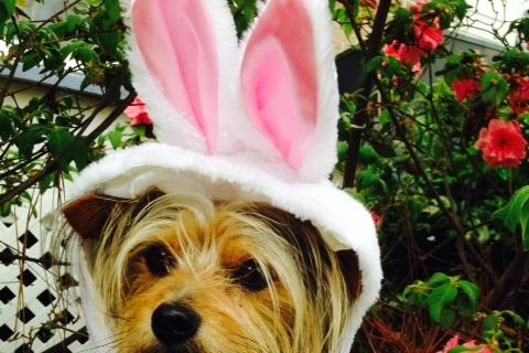Top 3 Easter Hazards for your Pets