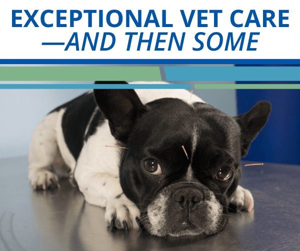Exceptional Vet Care—And Then Some