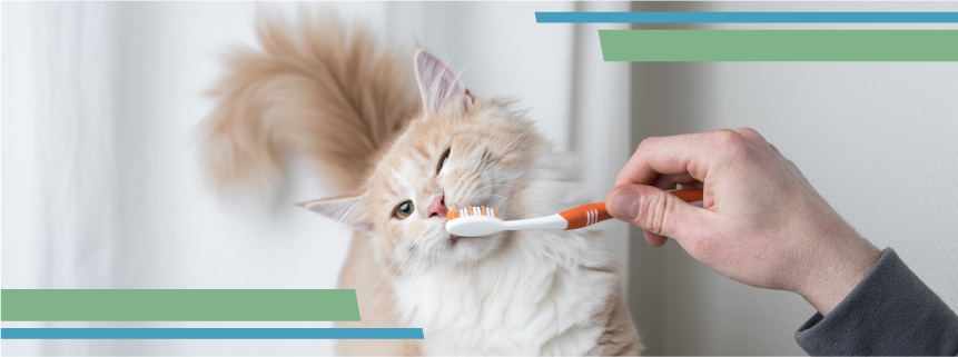Brush Up On Your Pet's Dental Health